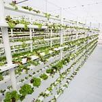 Megérkezett a modern termelés vívmánya; a vertikális kertészet